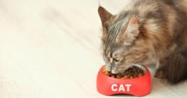 Katze am fressen