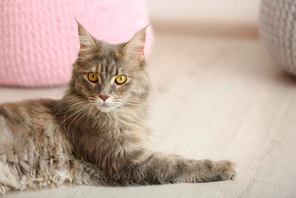 Katze liegt auf dem Fussboden