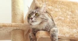 Katze schaut aus Katzenhöhle