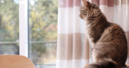 Katze schaut aus dem Fenster