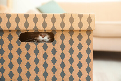 Katzennase schaut aus Karton