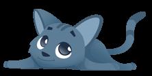 bestes-katzenfutter.com - Katze Felicitas