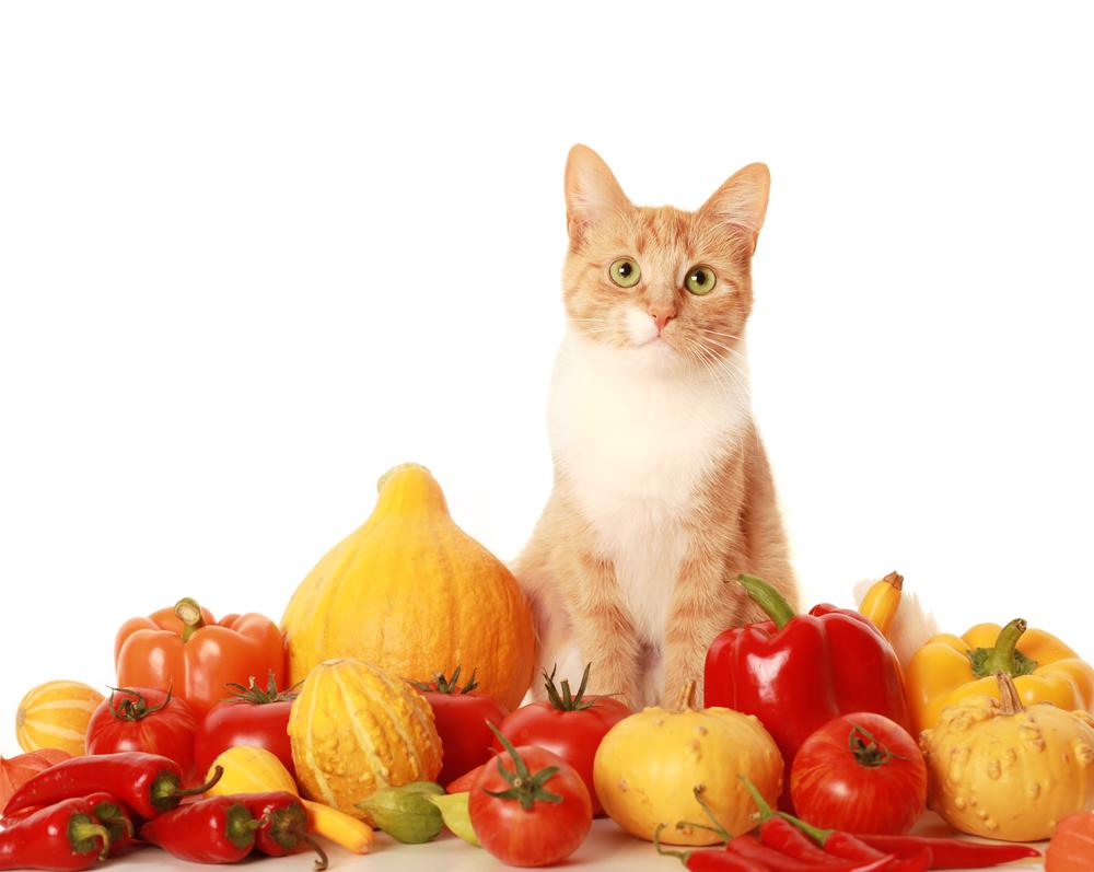 Veganes Katzenfutter