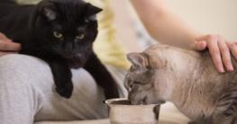 Katzen am Napf