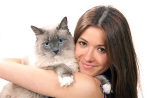 Ragdoll Katze auf dem Arm
