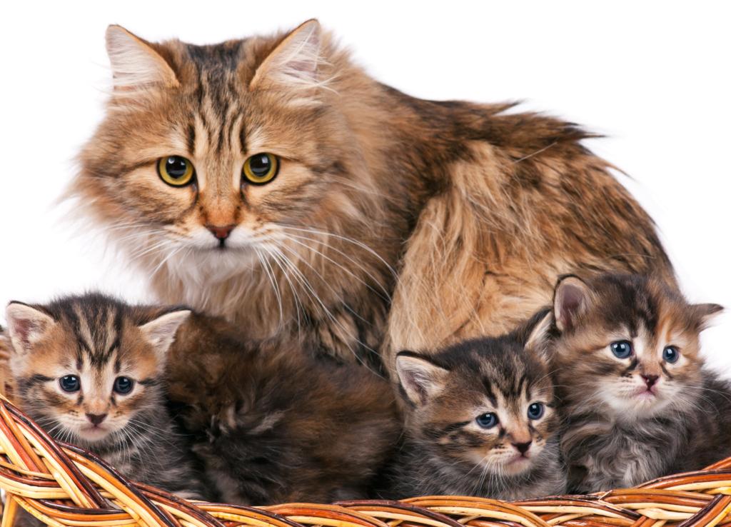 Futterumstellung Kitten